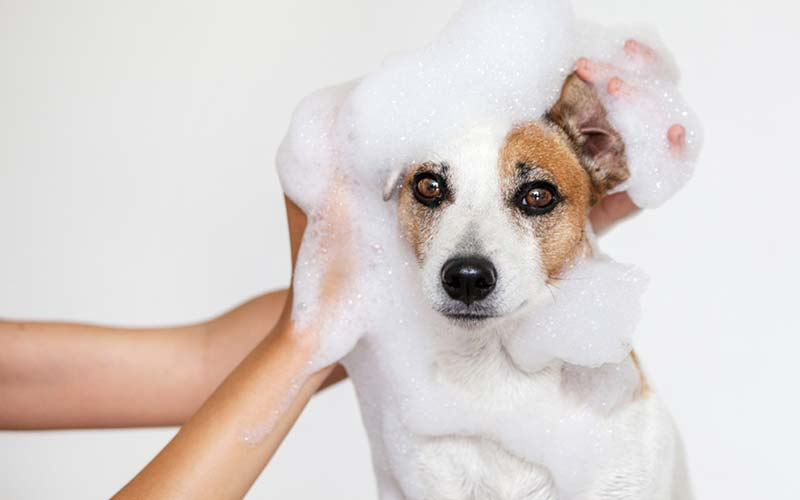 Best shampoo for dogs with dry skin