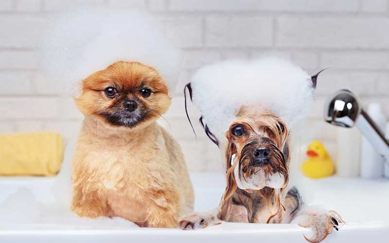 Dog Shampoo for Dandruff