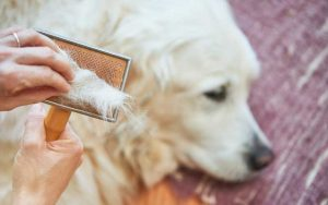 shampoo for dog Shedding