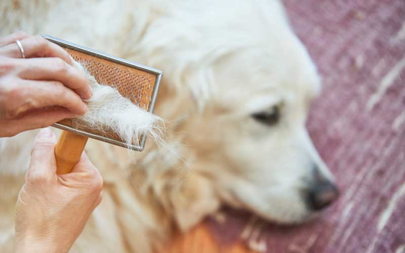 shampoo for dog Shedding
